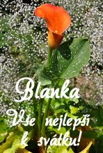 přání k svátku blanka Přání k svátku podle ženských jmen   Fotobanka zdarma.cz přání k svátku blanka